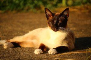 cat-1482271_960_720