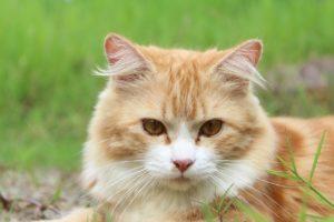 cat-111793_1280