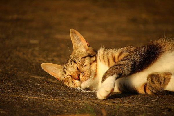 cat-1482258_640