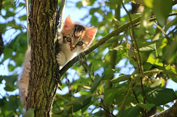 cat-1647775_640