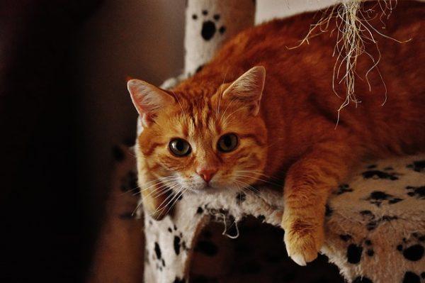 cat-1692707_640