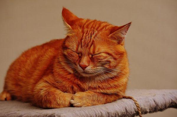 cat-1692794_640