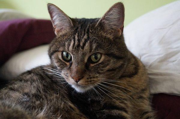 cat-292600_640