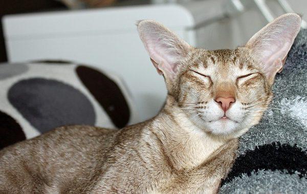 cat-408784_640