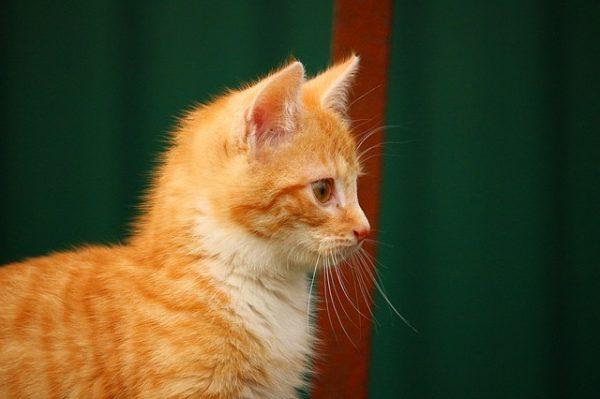 cat-1094308_640