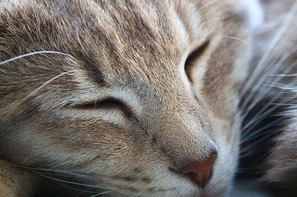 cat-1319538_640