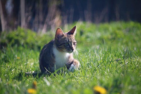 cat-1344484_640