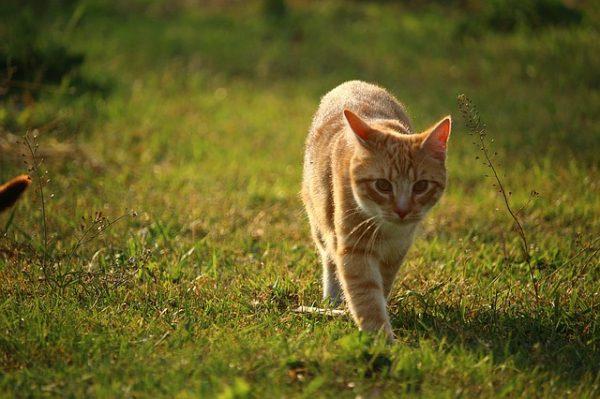 cat-1403898_640