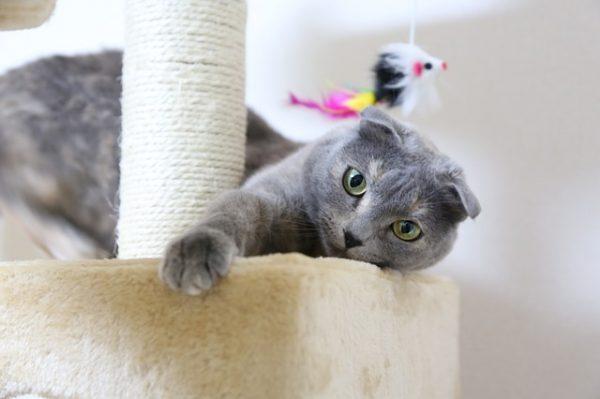 cat-1684255_640