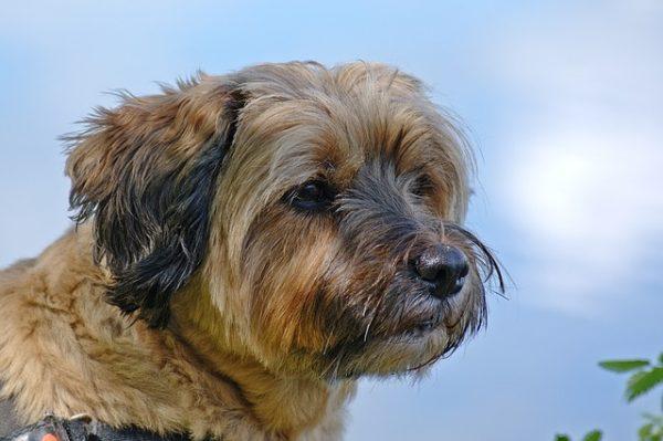 dog-1437444_640