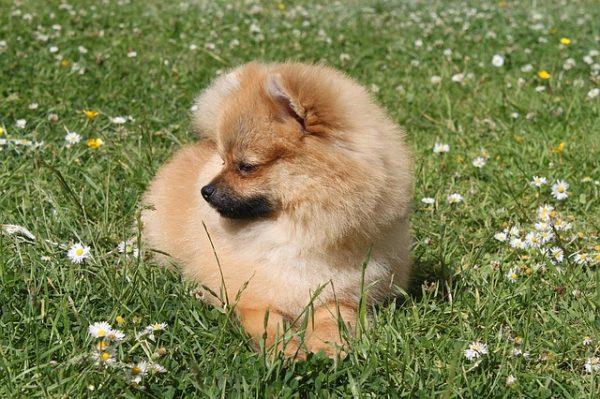 dog-1475825_640