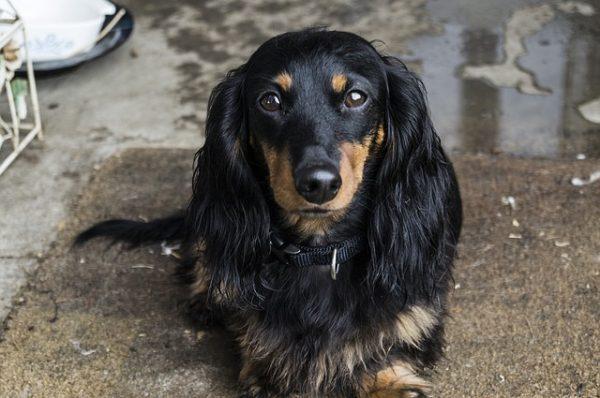 dog-224451_640