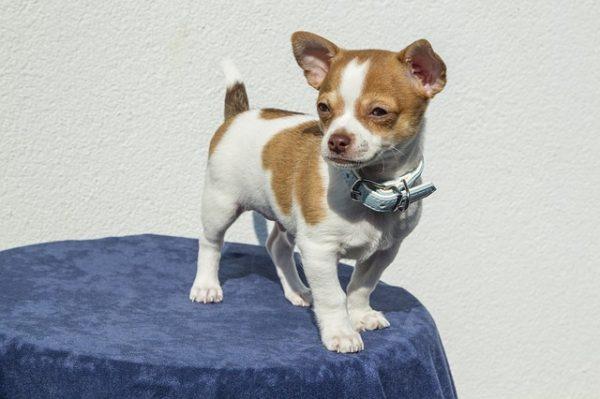 puppy-1047454_640