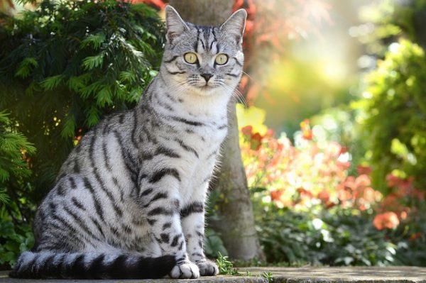 cat-1679193_640