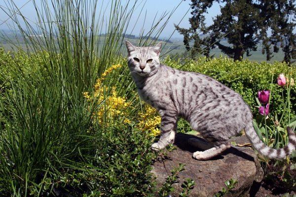 cat-624410_640
