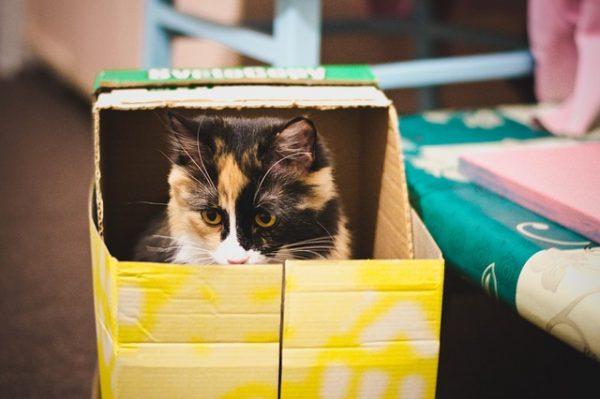 cat-650770_640
