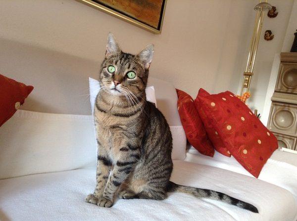 cat-742307_640