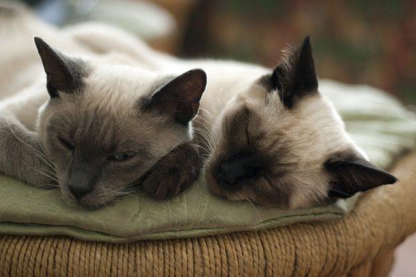 cats-882051_640