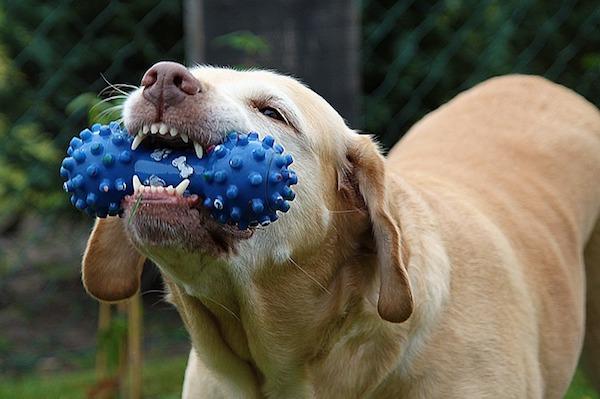 dog-167663_640