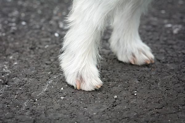 dog-feet-1543307_640