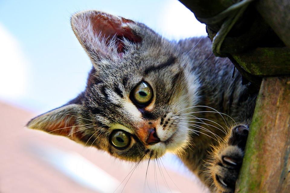 猫のこと知ってますか?意外と知らない猫の基礎知識