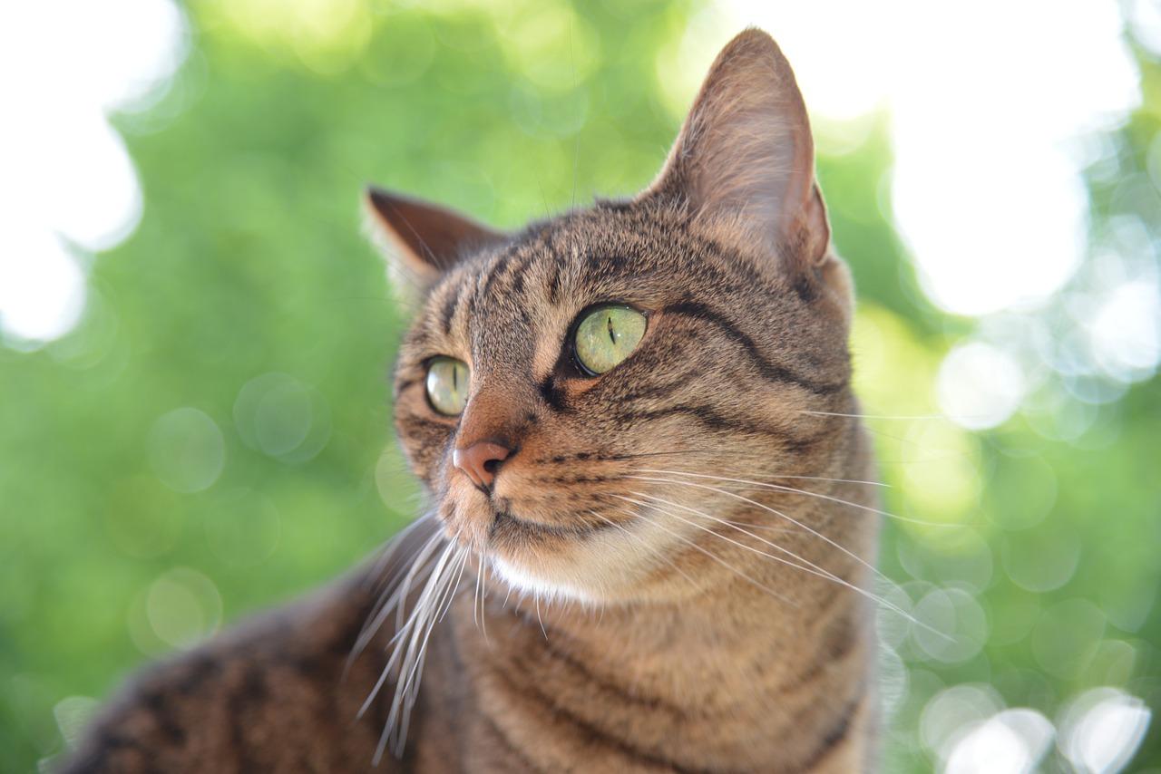 猫の気持ちを読み取ろう!猫の表情と猫の気持ち