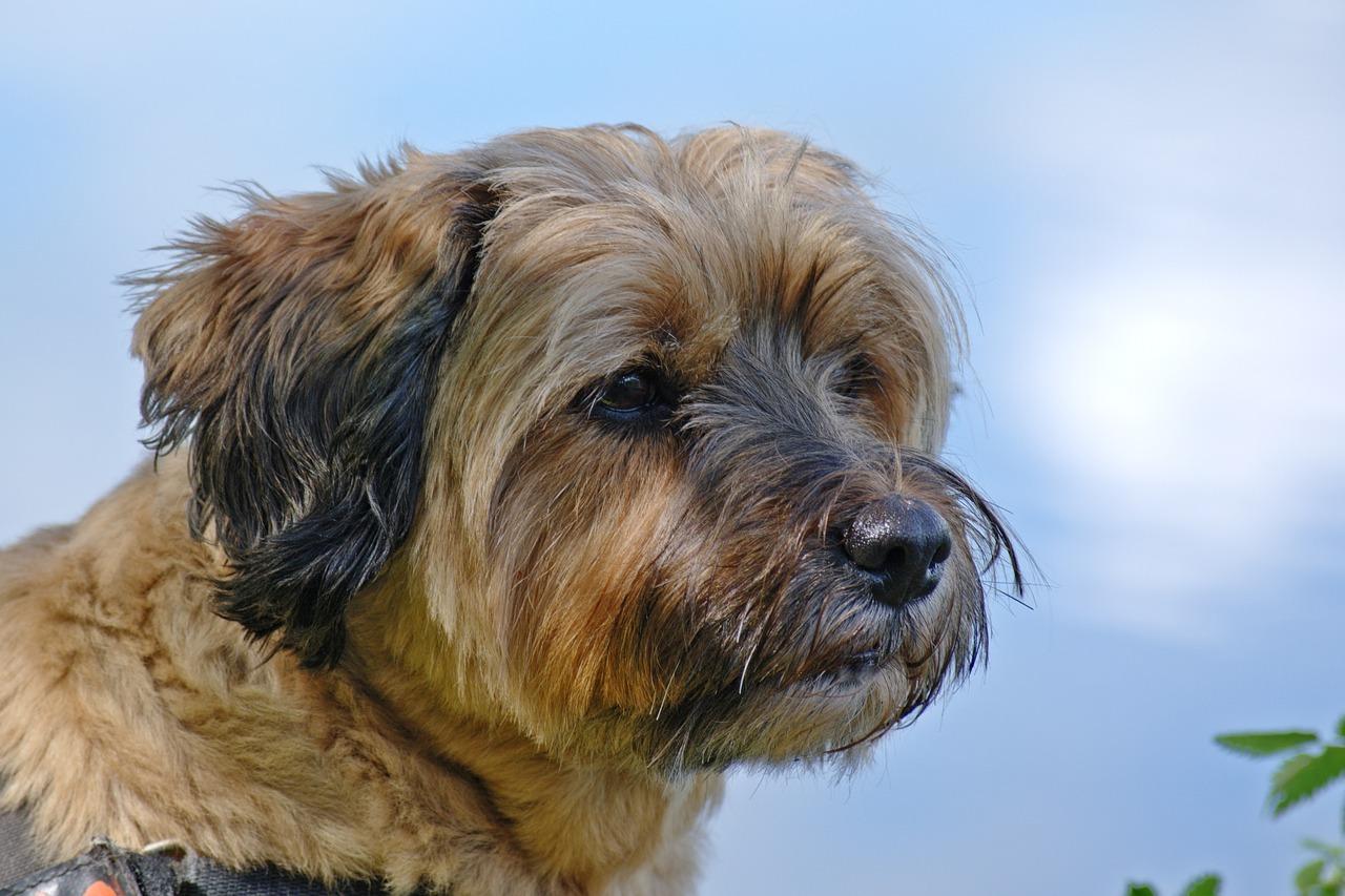 犬の気持ちを表情で理解しよう!犬と仲良くなる方法