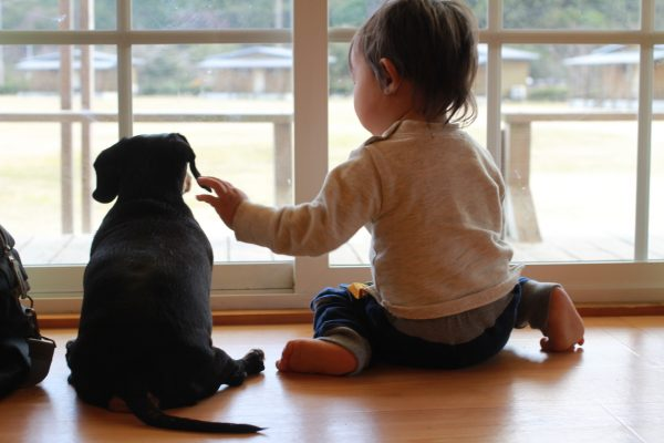 室内の飼育環境を整えよう!犬が喜ぶ部屋づくりのコツ