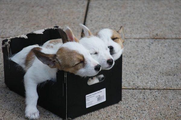 犬を飼いたい!飼う前に知っておきたい愛犬との出会い方