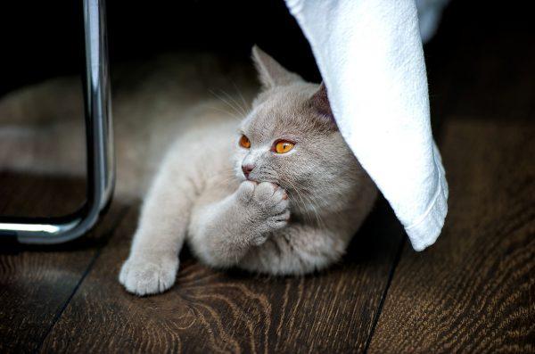 猫はしつけが大事!猫と仲良く暮らすためのしつけの基本