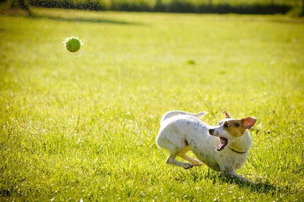 犬と暮らすにはどれくらい必要?犬にかかる費用を知ろう