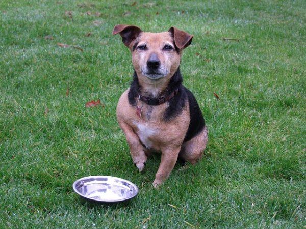 ドッグフードは健康の基本!犬のための最適な餌の選び方