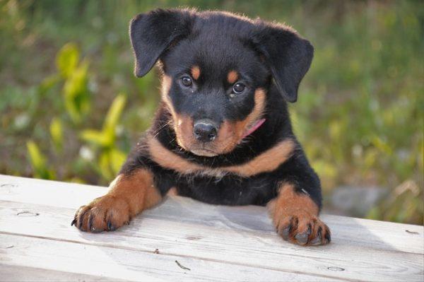 犬の気持ちを読み取ろう!犬と家族になるための基礎知識