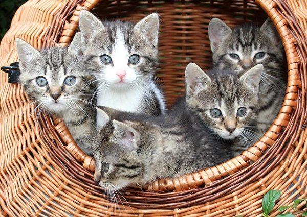 子猫が家にやってくる前に知っておきたい子猫の育て方