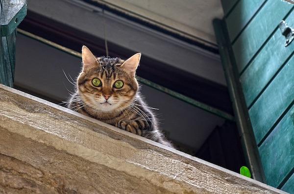一人暮らしでも猫を飼いたい!一人で猫と暮らす方法