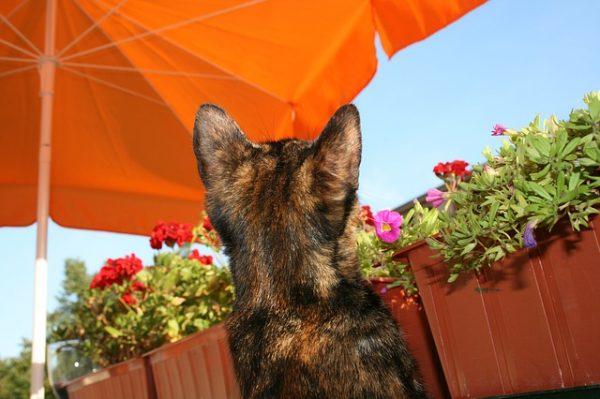 猫と一緒に暮らしながら旅行も楽しむための方法教えます