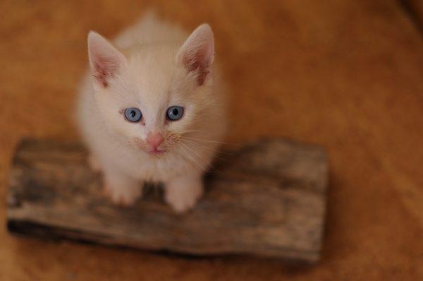 正しいキャットフードの選び方と猫の餌の基礎知識