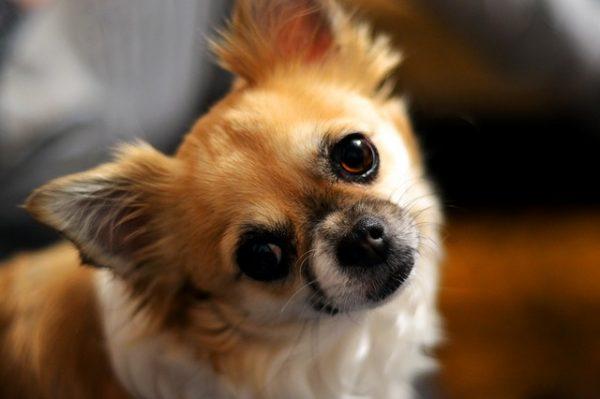 いい関係にはしつけが大事!ストレスなしで犬をしつける方法