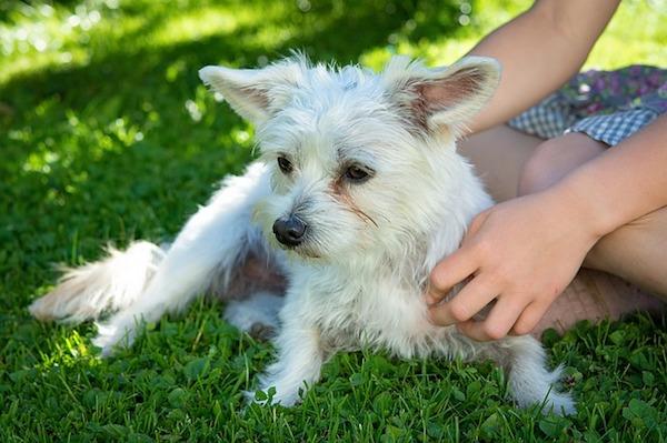 犬のお手入れが健康につながる!犬のお手入れ基礎知識