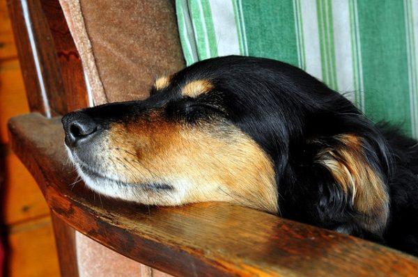 犬の健康を守ろう!知っておくべき犬の病気と対処法