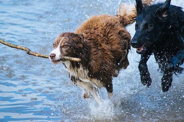 ただ歩かせるだけじゃない!犬の散歩を上手にするコツ