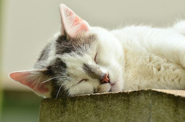 飼い猫が死んだら飼い主としてすべきこと