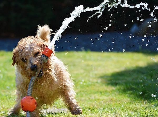 遊びながら覚えよう!賢く育つ犬のおもちゃの選び方