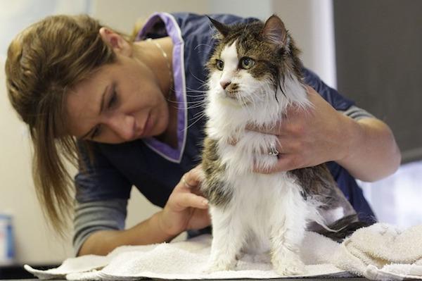 猫の健康を守ろう!猫に嫌がられないお手入れ方法