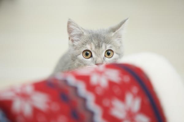 猫を飼いたい人は要チェック!猫との出会いの基礎知識