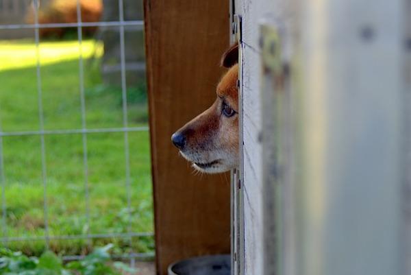 自然災害にあったとき犬と一緒に避難する方法