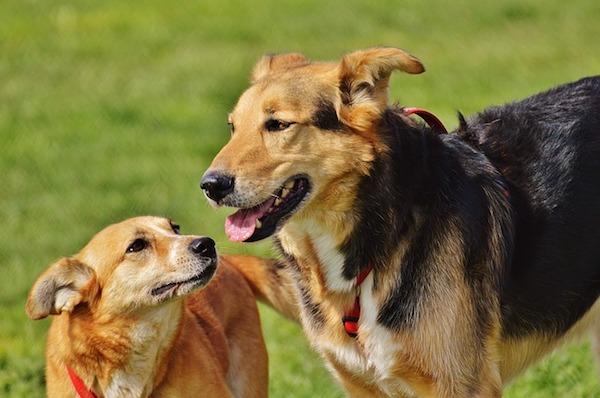 社会性の高い犬に育てよう!社会化期活用のポイント