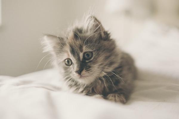猫が来る前に揃えて起きたい猫グッズと部屋の作り方