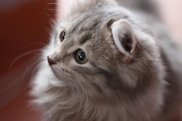 困った猫の抜け毛を解消する猫の抜け毛対策