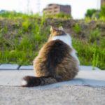 肥満はこんなにも危険!犬や猫が太ることで発生するリスク